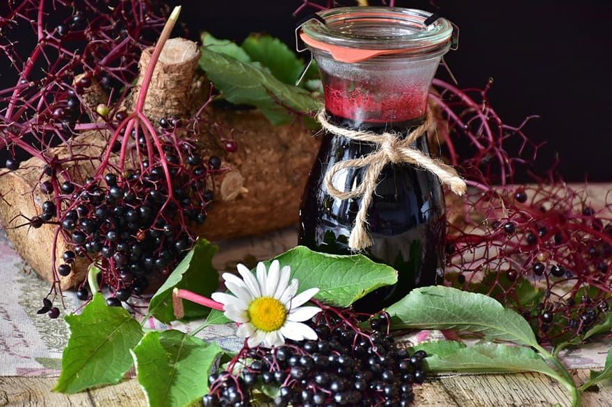 Бъзакът – билката на билките